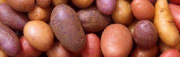 Reconsidérer la patate