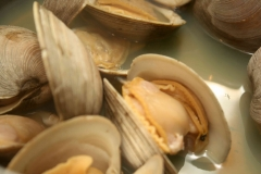 Clams ouverts.jpg