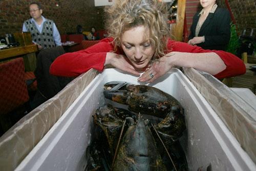 Un homard de 140 ans amnistié