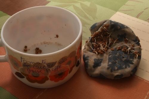 Du jardin à l'assiette – La germination