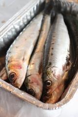Sardines (2).JPG