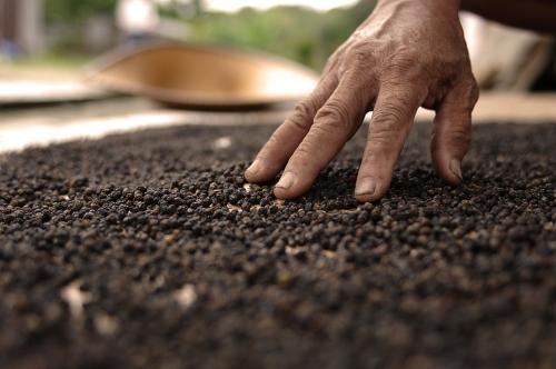 Crédit Archivio Slow Food-Alberto Peroli (2).jpg
