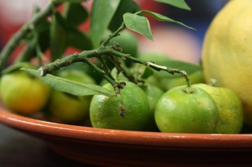 Le chinotto – agrume et boisson
