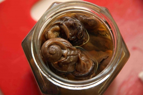Escargots du Maustichi.jpg