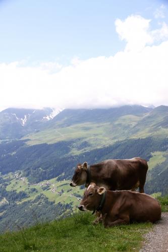Le Tyrol, ça grimpe et ça creuse!