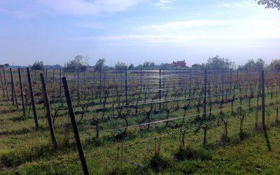 Orto, le vin de Venise