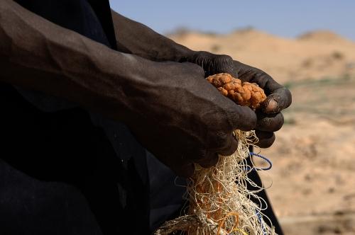 Slow Food, au-delà du produit
