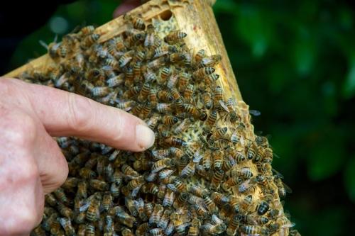 Des ruches à Bruxelles!
