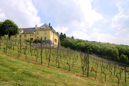 La Mazelle: l'aventure de la vigne
