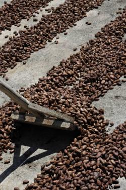 chocolat,salon du chocolat,pierre marcolini,chocolatier belge