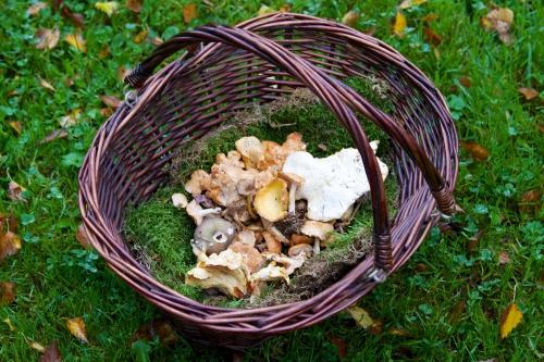 avoine,champignons des bois,gibier,recette