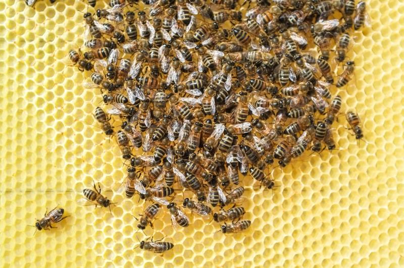 miel,apiculteur,apiculture,nectar & co,xavier renotte