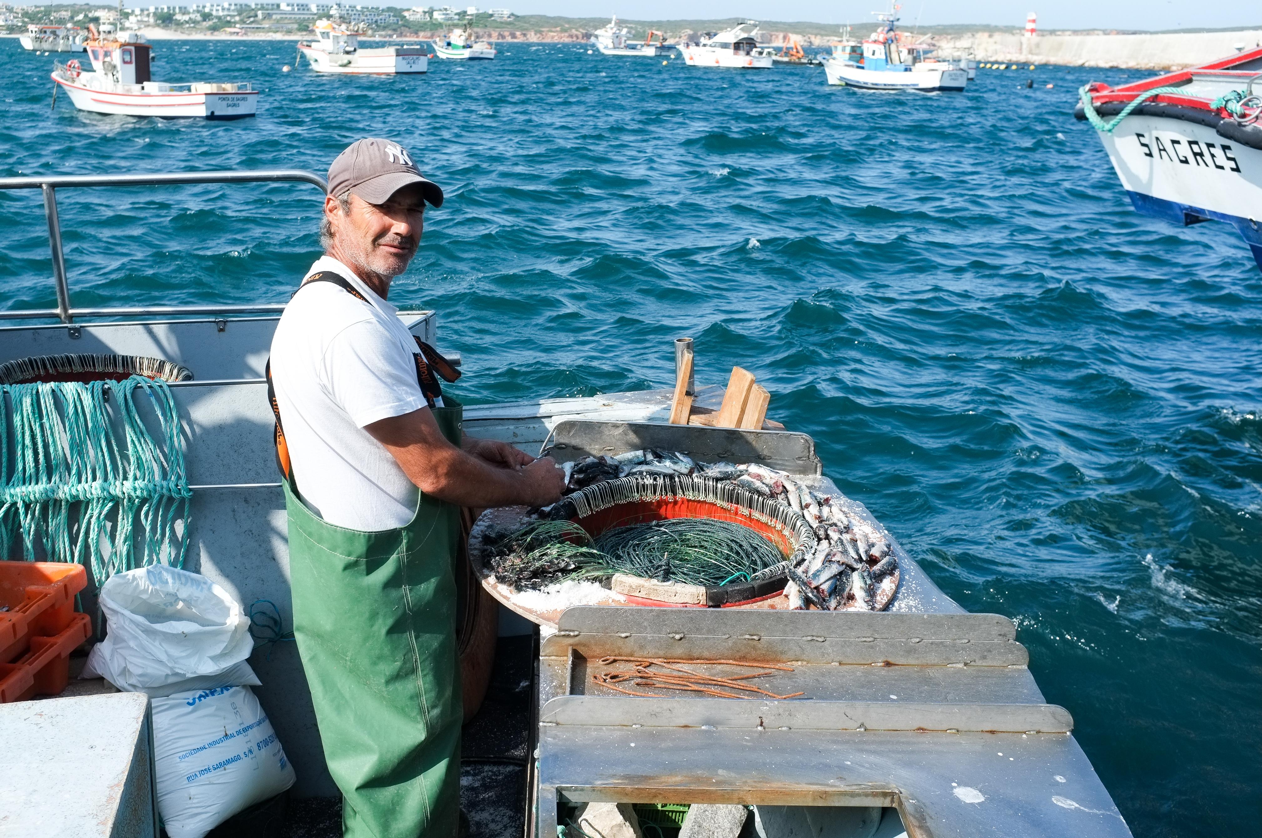 Tous les jours à 17h, sur l'Alfonsino Imperador, on prépare les 10 boîtes avec 180 hameçons rt on y accroche des sardines pour pêcher le  mérou noir ou des dorades royales.