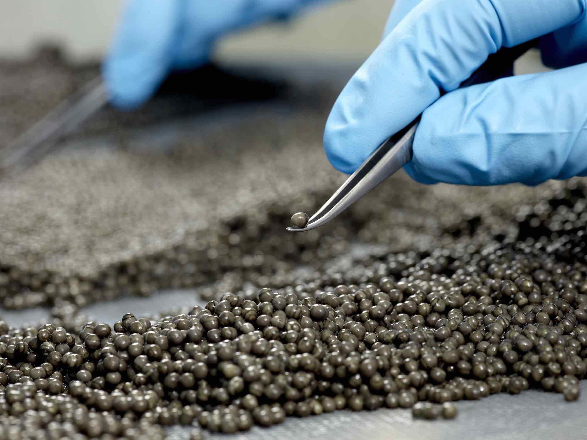 Royalm Belgia Caviar17