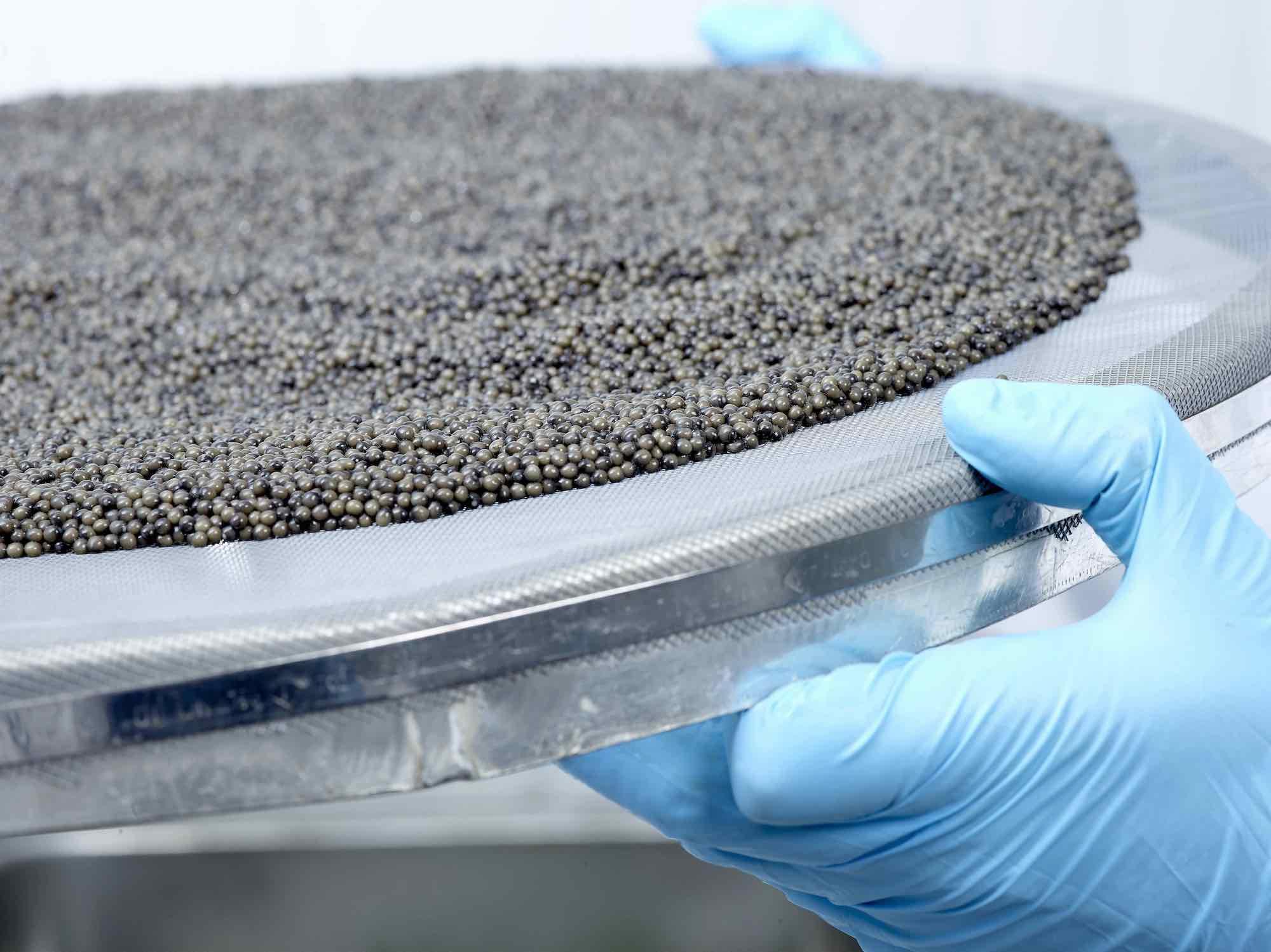 Royalm Belgia Caviar22