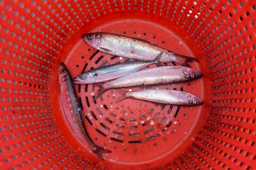 Beaucoup de poissons datant site Irlande