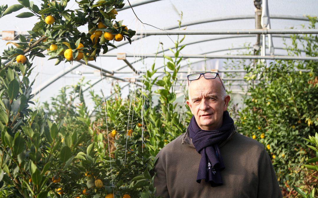 50 nuances d'agrumes belges